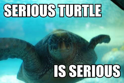 Serious_turtle